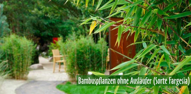 bambus kaufen bambuspflanzen als sichtschutz. Black Bedroom Furniture Sets. Home Design Ideas