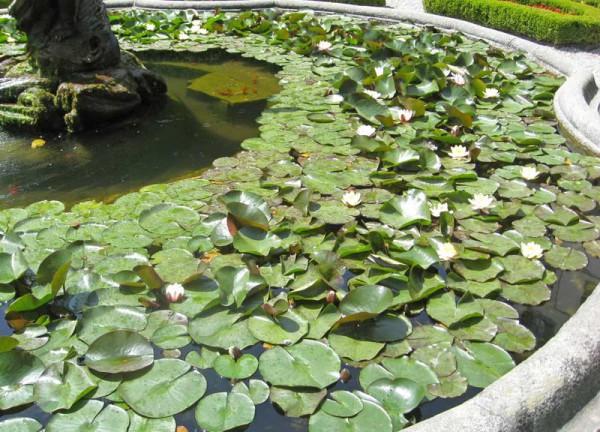 Wasserpflanzensortiment mit reinigender Wirkung-Algenbekämpfung