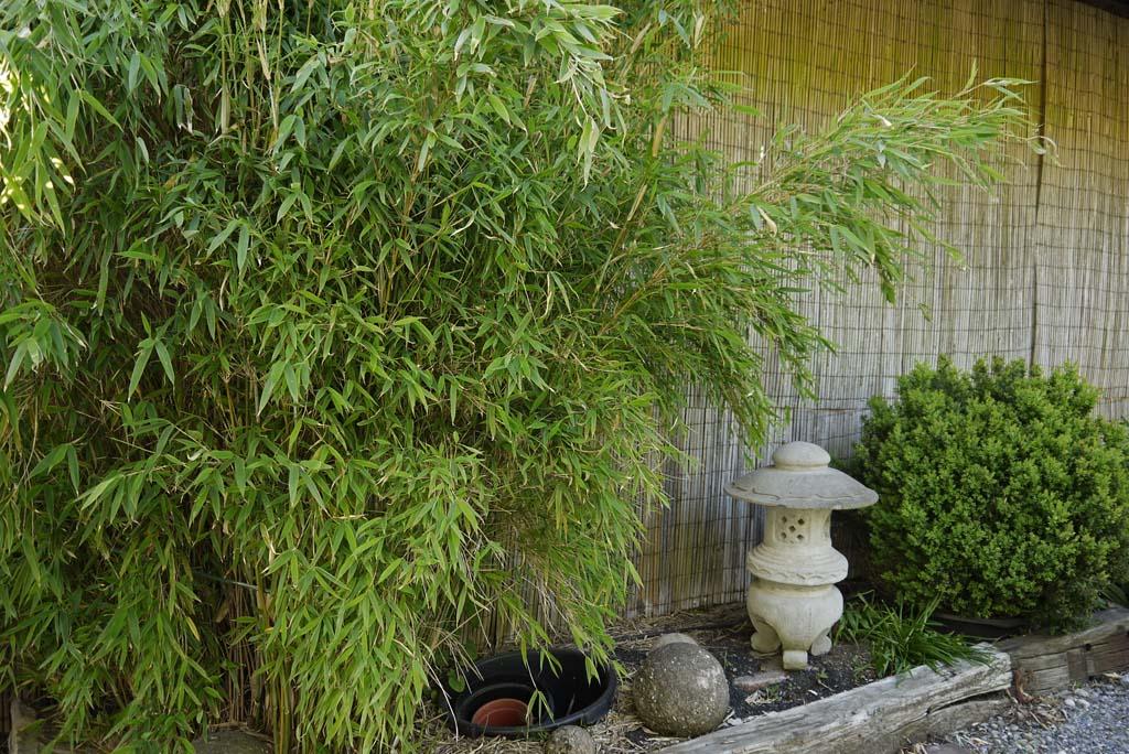 keine bange vor der bambusbl te bambus wissen was ist bambus bambuswald bambus und. Black Bedroom Furniture Sets. Home Design Ideas