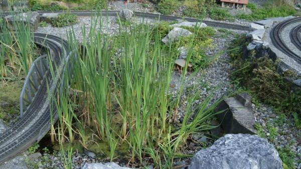 Typha angustifolia, Schmalblättriger Rohrkolben