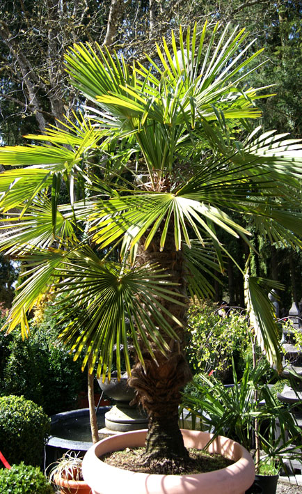 palmen bananen garten pflanzen bambus und pflanzenshop