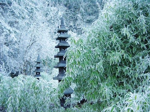 Bambuspflege Im Winter Winterschutz Bambus Pflege Bambus Und