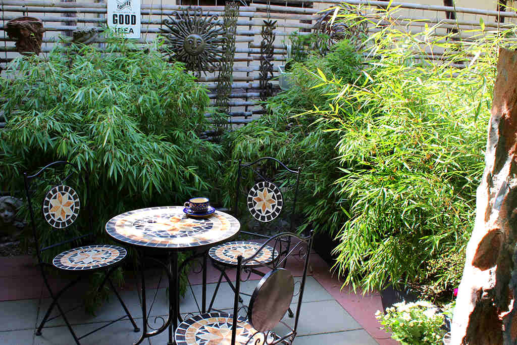 Bambus Als Sichtschutz Fur Terasse Und Balkon Bambus Und Pflanzenshop