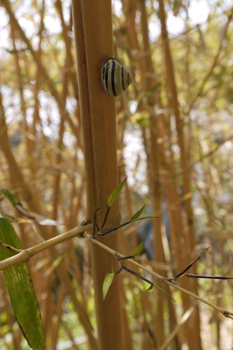 bambus-treibt-wieder-bambuswald01