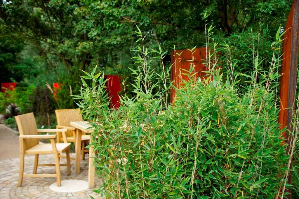 was ist bambus bambuspflanzen bambus wissen was ist bambus bambus und pflanzenshop. Black Bedroom Furniture Sets. Home Design Ideas