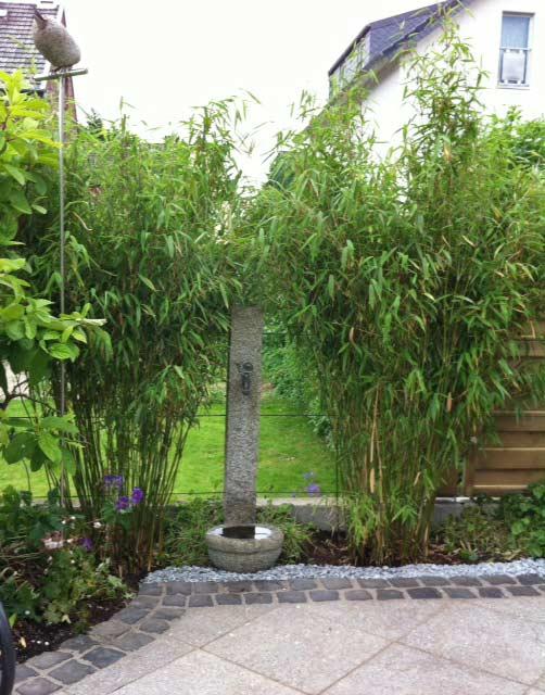 fargesia murielae standing stone garten bambus bambus. Black Bedroom Furniture Sets. Home Design Ideas