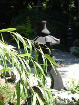 bambus-und-pagode