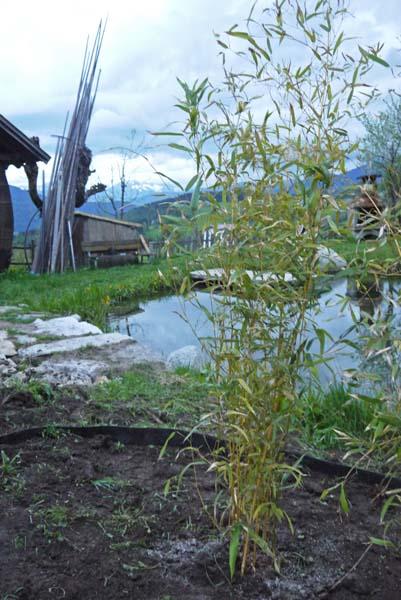 rhizomenfolie-einbau-2012-bambuswald1650e86df2592ce