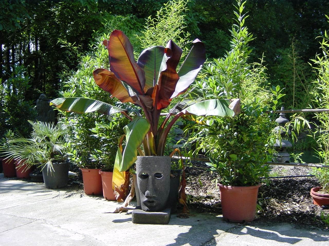 Mediterranen Pflanzen Im Garten Bambus Und Pflanzenshop