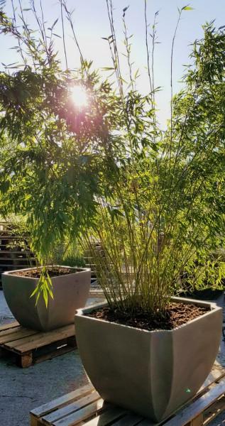 Palmea Blumenkübel mit Wasserspeicher