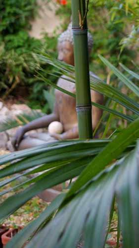 phyllostachys-aurea-hysp-bambuswald-web