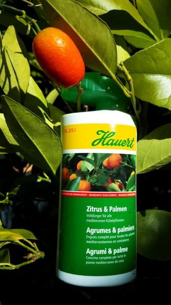 Zitrus- und Palmendünger von Hauert