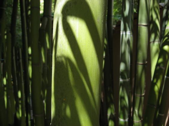 was ist bambus bambuspflanzen bambus wissen was ist bambus bambuswald bambus und. Black Bedroom Furniture Sets. Home Design Ideas
