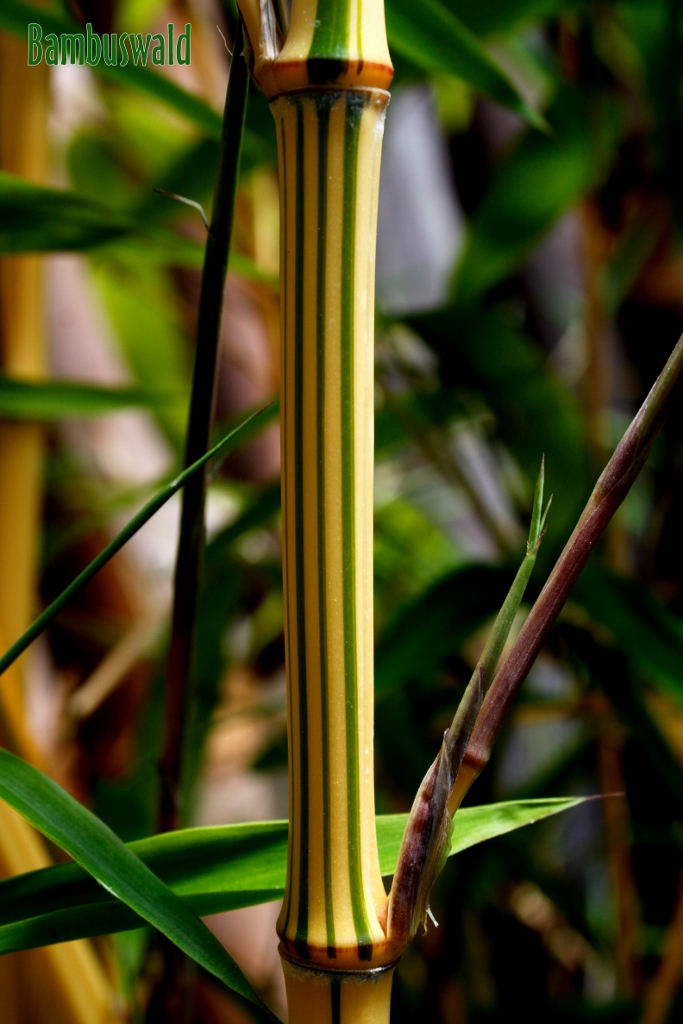 wurzelsperre f r bambus wurzelstop f r bambus str ucher hecken wurzelsperre wurzelsperre. Black Bedroom Furniture Sets. Home Design Ideas