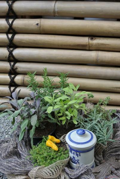 Kräutersortiment für die kräftige Küche