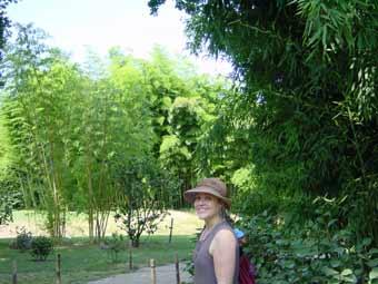 kontakt hofstetter m hle gmbh bambus und pflanzenshop f r haus und garten. Black Bedroom Furniture Sets. Home Design Ideas