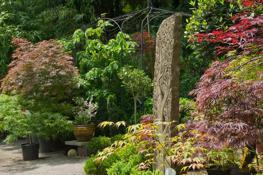Bambus kaufen • Bambuspflanzen als Sichtschutz  Bambuswald - Bambus ...