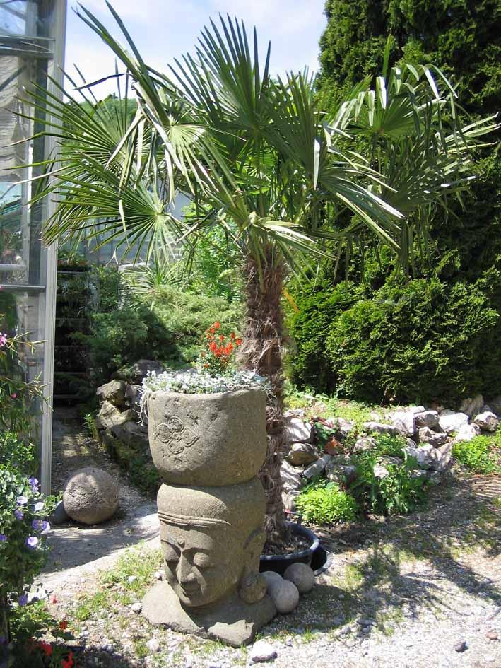 mediterranen pflanzen im garten bambus und pflanzenshop. Black Bedroom Furniture Sets. Home Design Ideas