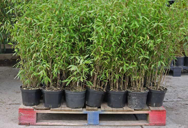 bambuswald-versandbilder-2