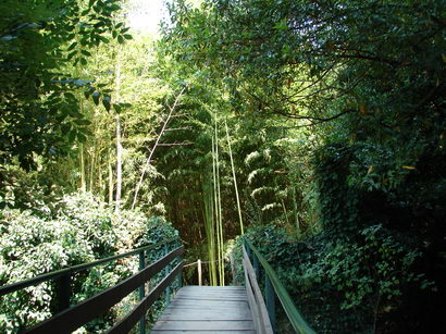bambusgarten-mit-bruecke-und-riesenbambus