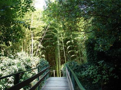 bambus pflege bambus und pflanzenshop. Black Bedroom Furniture Sets. Home Design Ideas