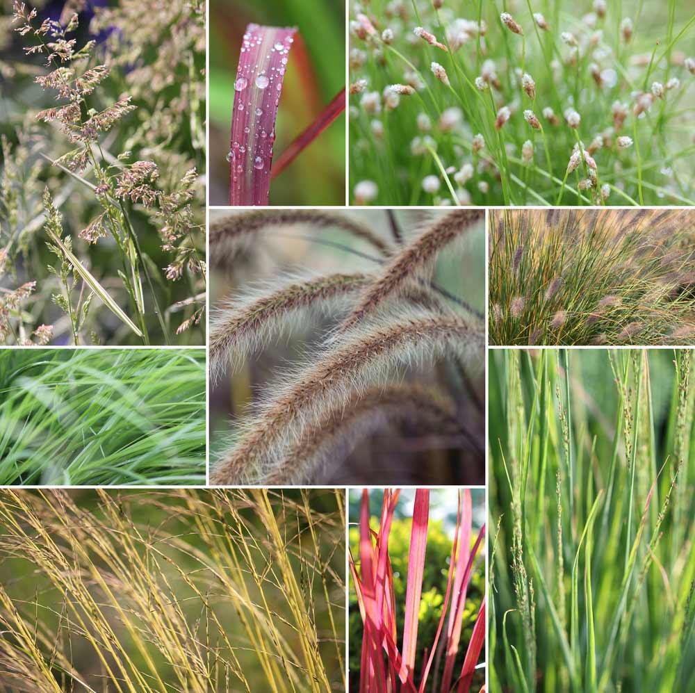 greaser-pflanzen-uebersicht-verschieden-sorten