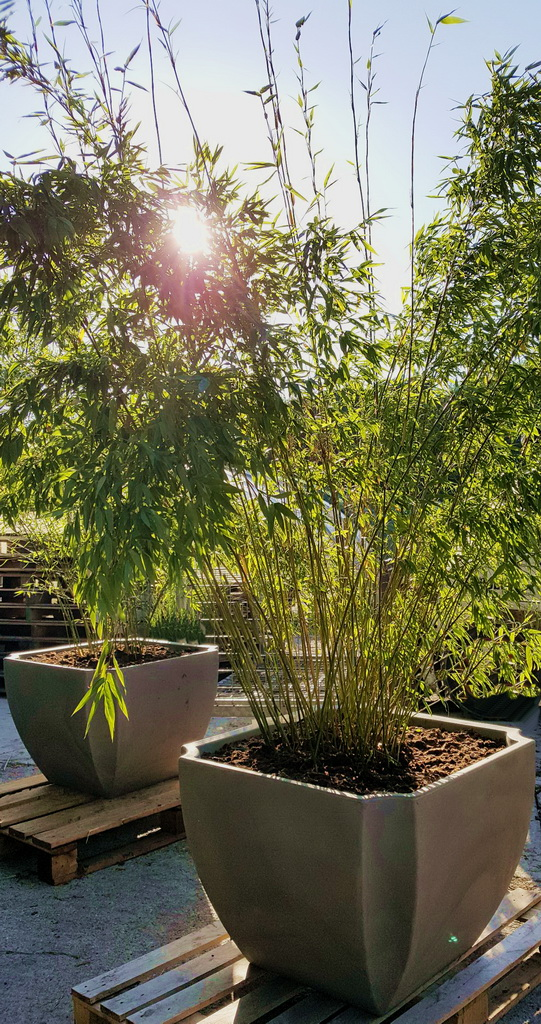 blumenk bel mit r dchen und wasserreserve bambus und pflanzenshop. Black Bedroom Furniture Sets. Home Design Ideas