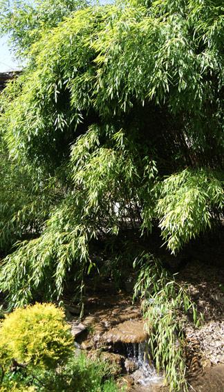 bambusgarten-bambuswald-1