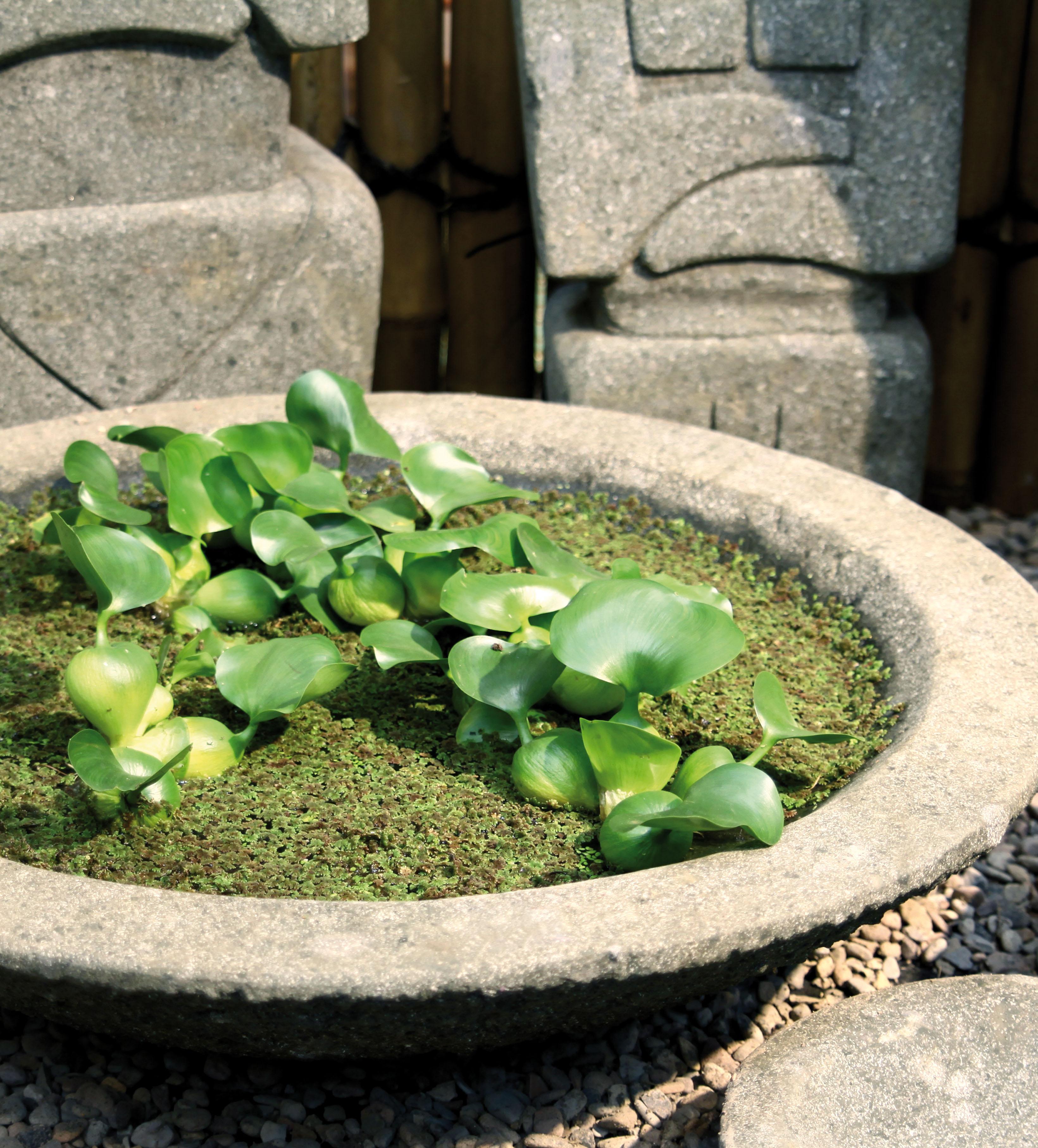 steinschale lotus aus basanit stein bambus und pflanzenshop. Black Bedroom Furniture Sets. Home Design Ideas