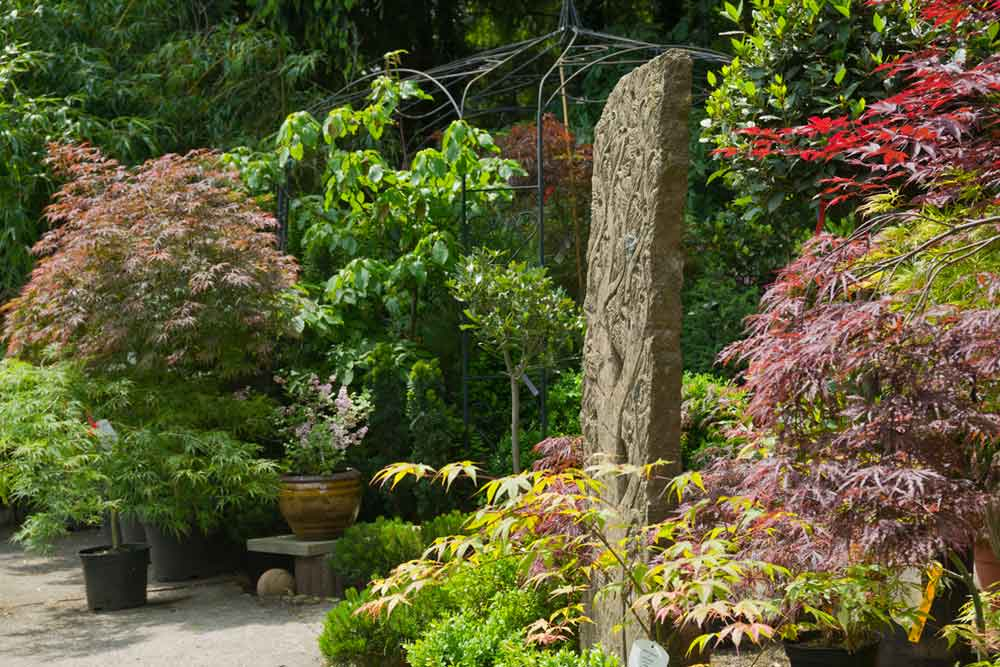 Bambus kaufen - Bambuspflanzen als Sichtschutz | Bambus und Pflanzenshop