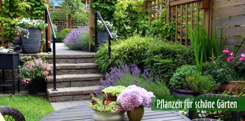 Pflanzen für schöne Gärten