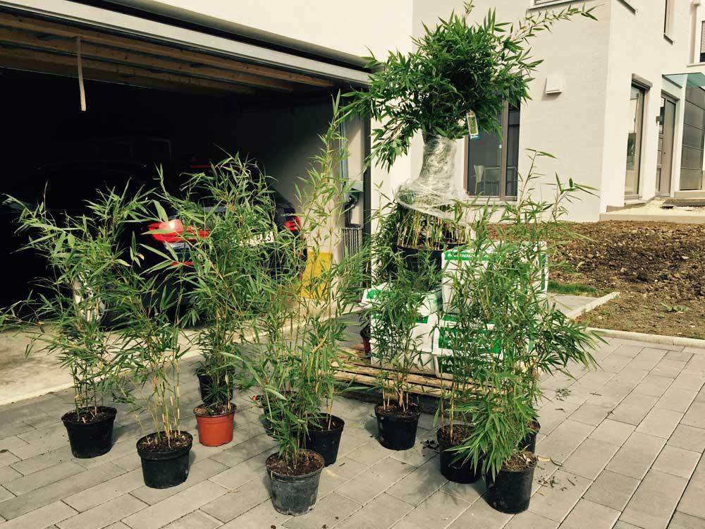 Versand-Bambuswald-beim-Kunden