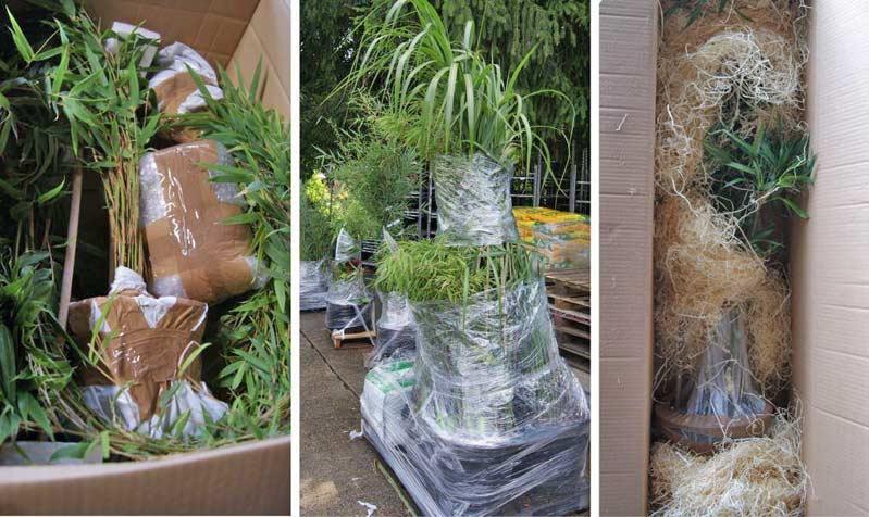 Verpackung-Bambuswald-Karton