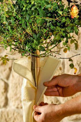 Stammschutz für Kübelpflanzen