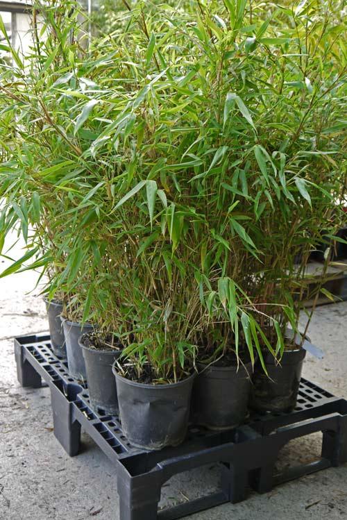 bambuswald-versandbilder-6