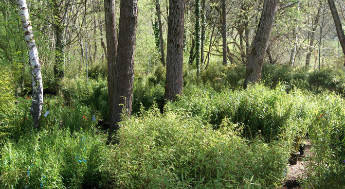bambus-im-bambuswald-150fade4f0e907