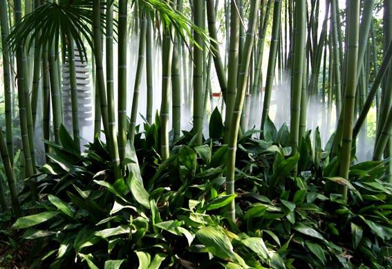 andrehellergarten2bambuswald