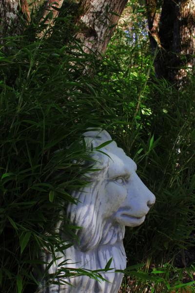 Grüner Mähnenbambus, Fargesia Green Lion ®