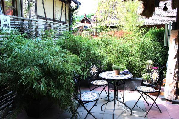 Mobiler Sichtschutz - Bambus Hecke im Kasten
