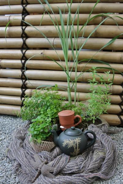 Kräutersortiment zur Zubereitung von Tee